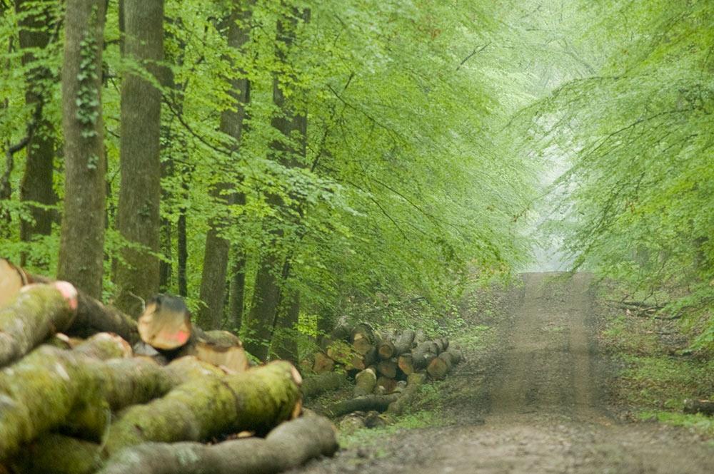 La forêt domaniale de Soulongis